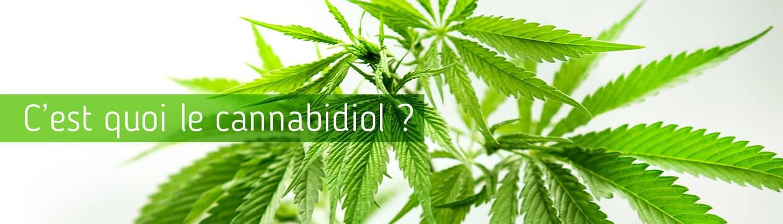 cannabiol-informations