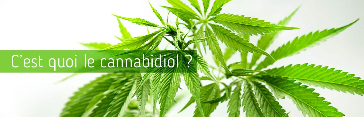 cannabiol-informations