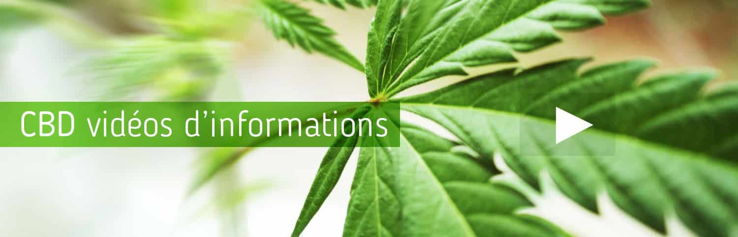 effets-cbd-videos-informations