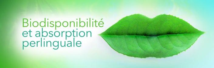 Biodisponibilite CBD absorption perlinguale