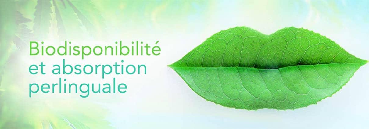 biodisponibilité-absorption-perlinguale