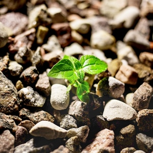 bioactif-force-vegetale