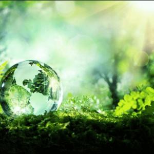 transparence bioactif
