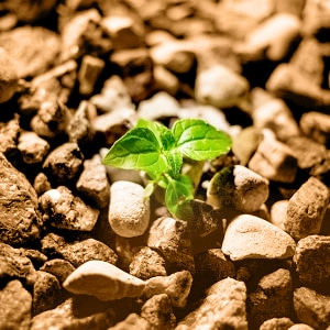 energie vegetale CBD bioactif