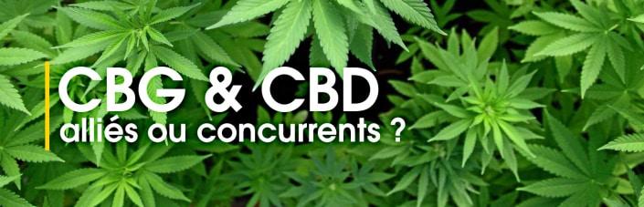 CBG et CBF pour plus d'effets