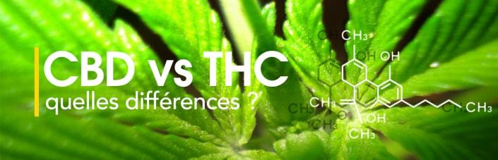 Cbd Versus Thc Quelles Differences