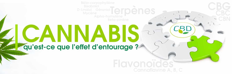 Effets d'entourage du cannabis